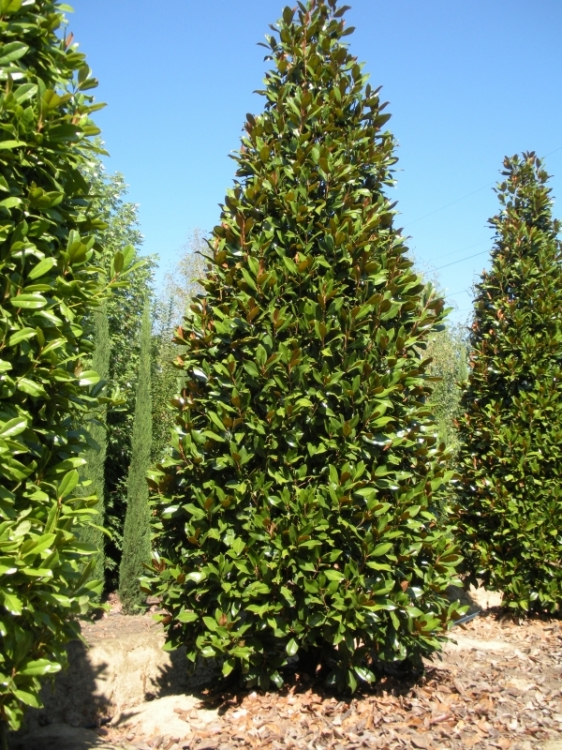 Amenajari peisagere si plante decorative felssysteme Plante decorative